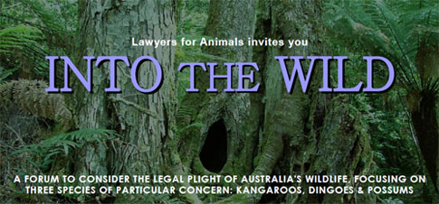 Into the Wild Invitation